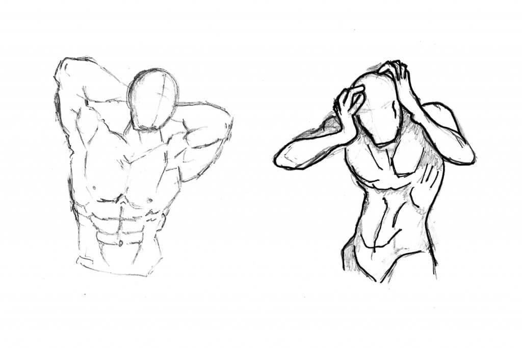 Dessiner les muscles du corps humain